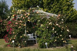Kordes Rosen Rosengarten