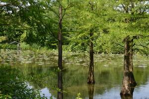 Arboretum in Ellerhoop