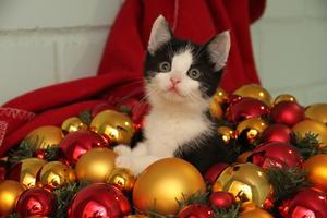 »Weihnachten im Tierheim» am 4. Advent
