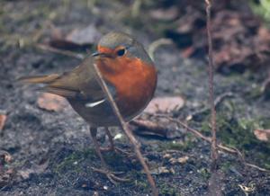 """Vogelkundliche Führung zur Zählaktion """"Stunde der Wintervögel"""" in Uetersen"""